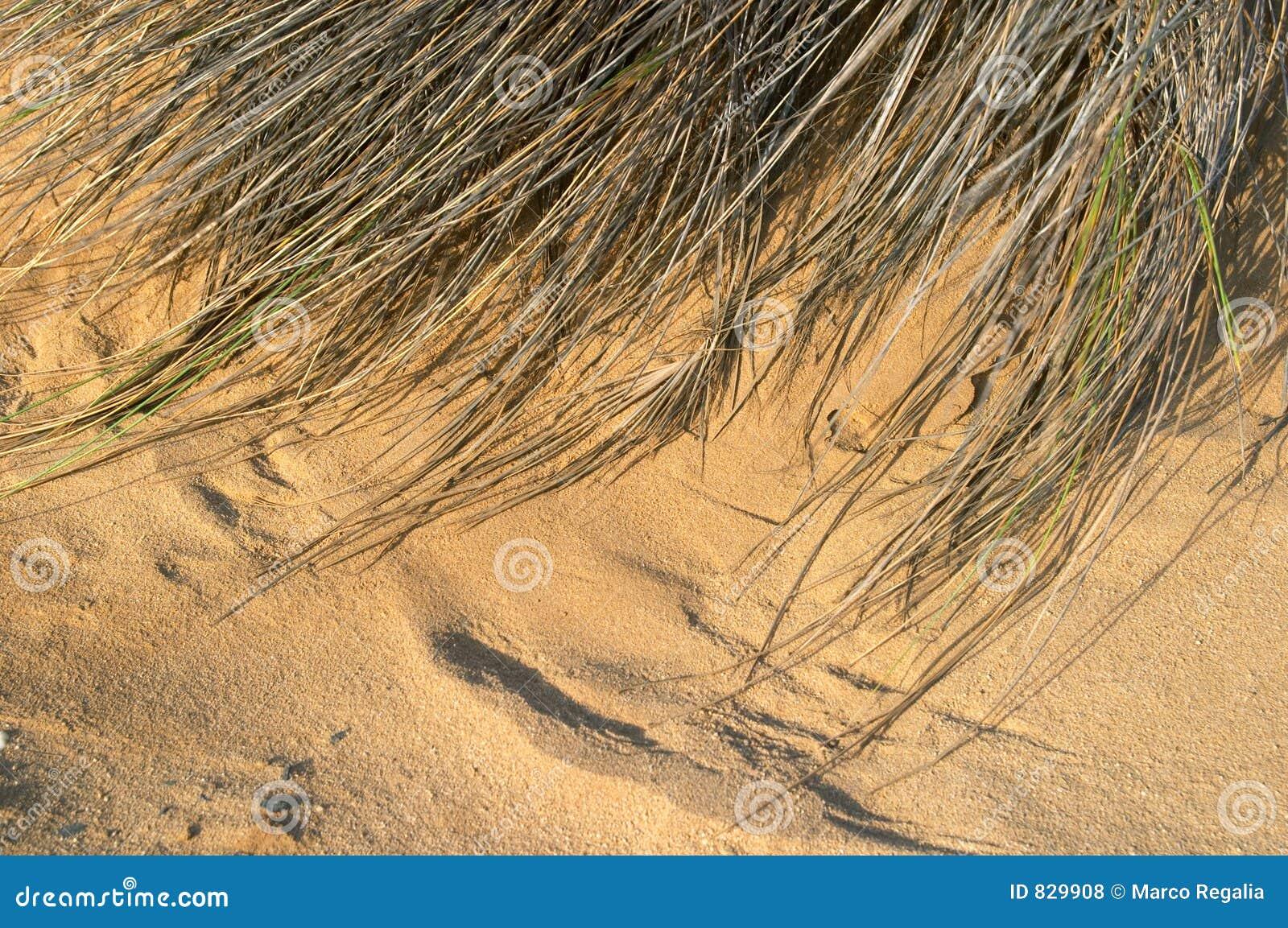 De textuur van het zand en van het gras
