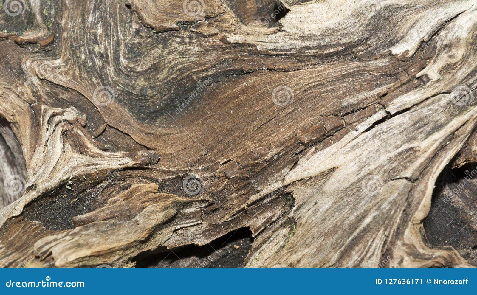 De textuur van oude doorstane houten, droge winkelhaak van een naaldboom, sluit kunst omhoog abstracte achtergrond