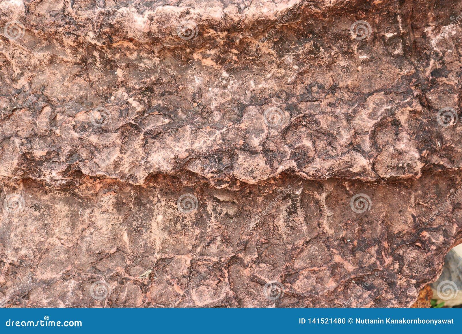 De textuur van de Stromatolitesteen - achtergrond