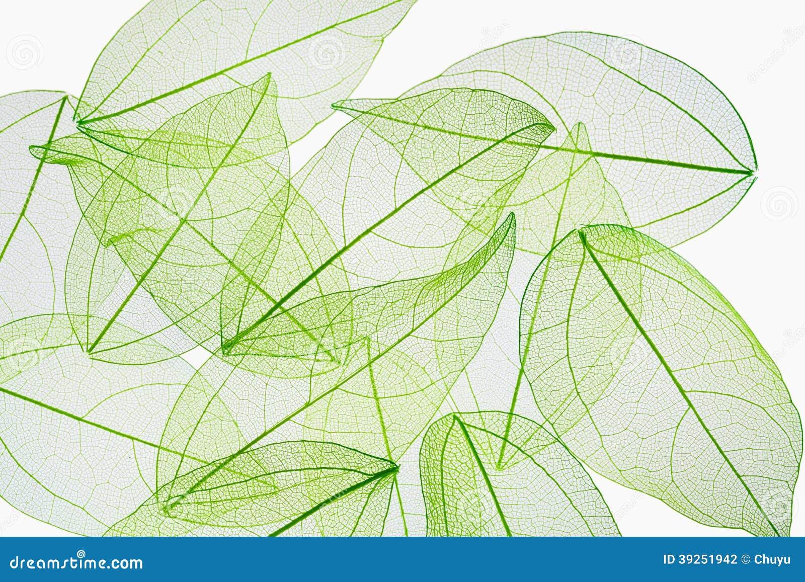 De textuurachtergrond van de bladader