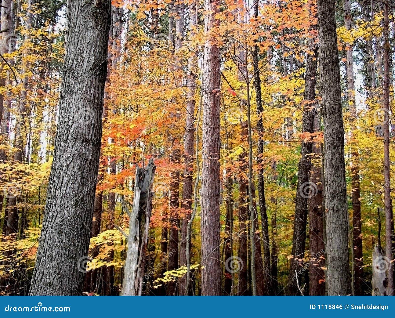 De tijd van de herfst