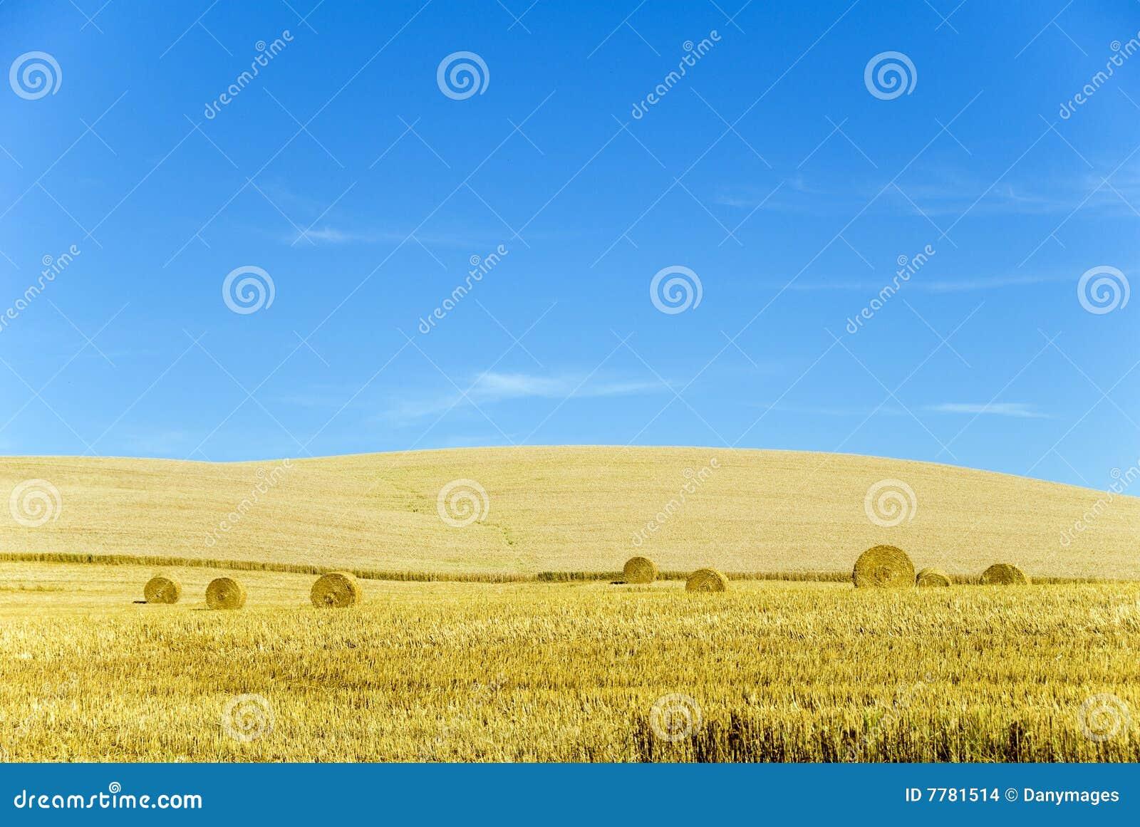 De tijd van de oogst