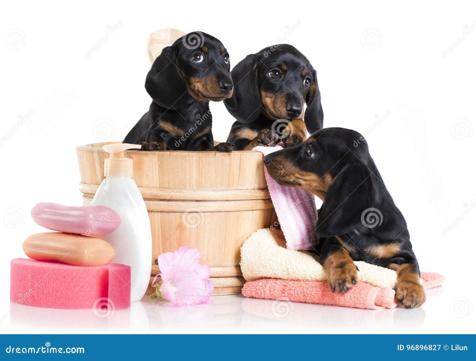 De tijd van het puppybad - Tekkelhond