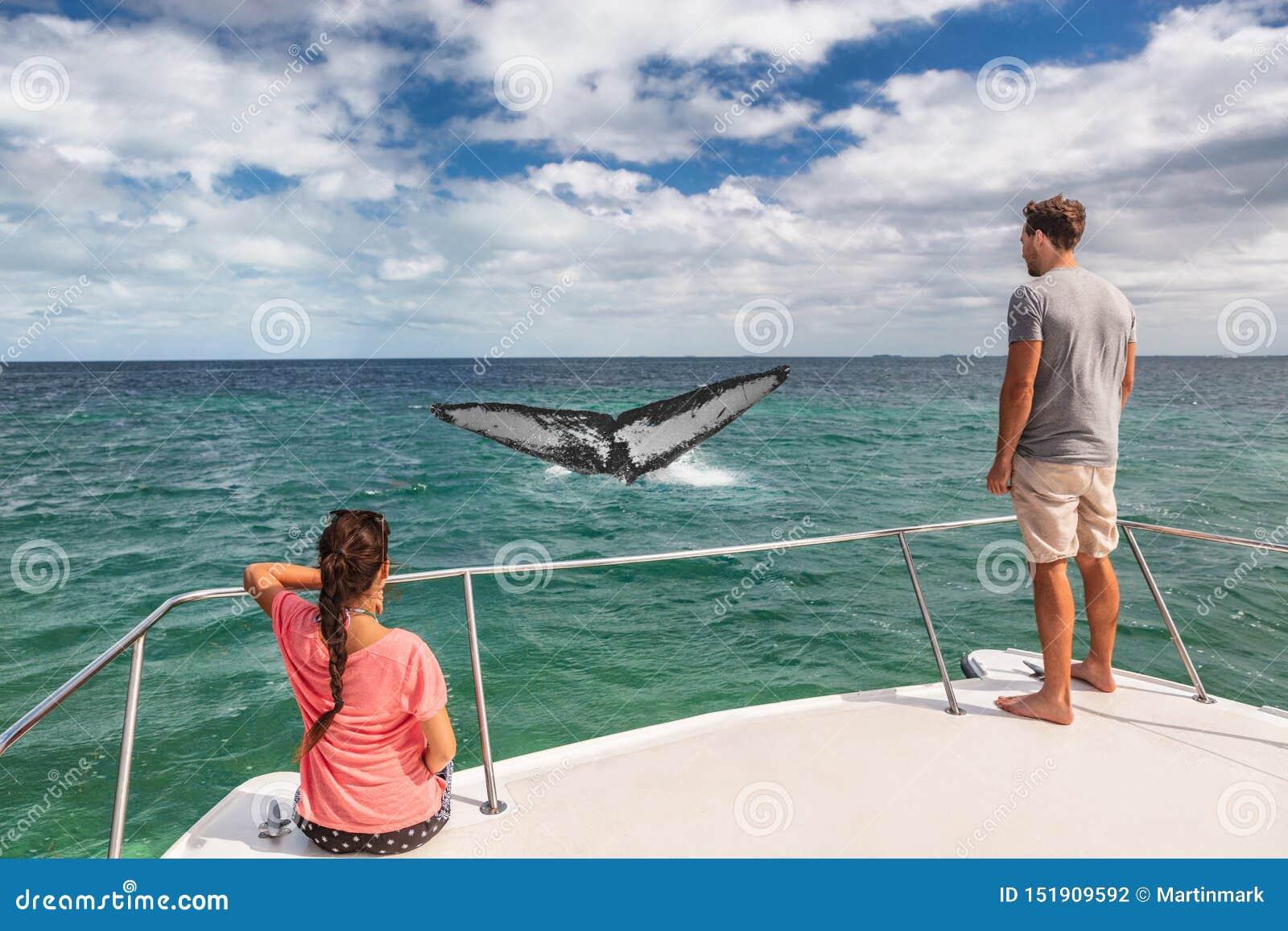 De toeristenmensen die van de walvis verwijderen de steel de lettende op rondvaart op schip gebochelde bekijken van overtredende