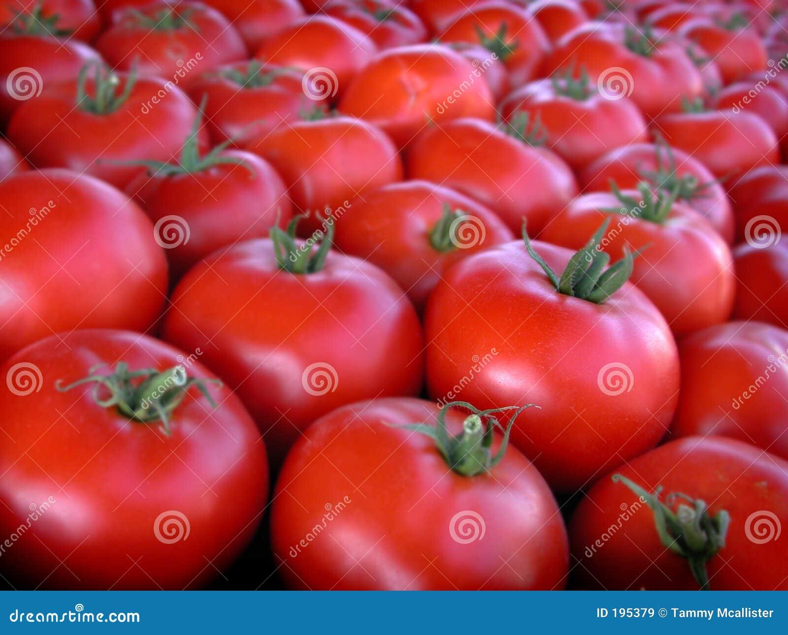 De Tomaten van de Markt van de landbouwer