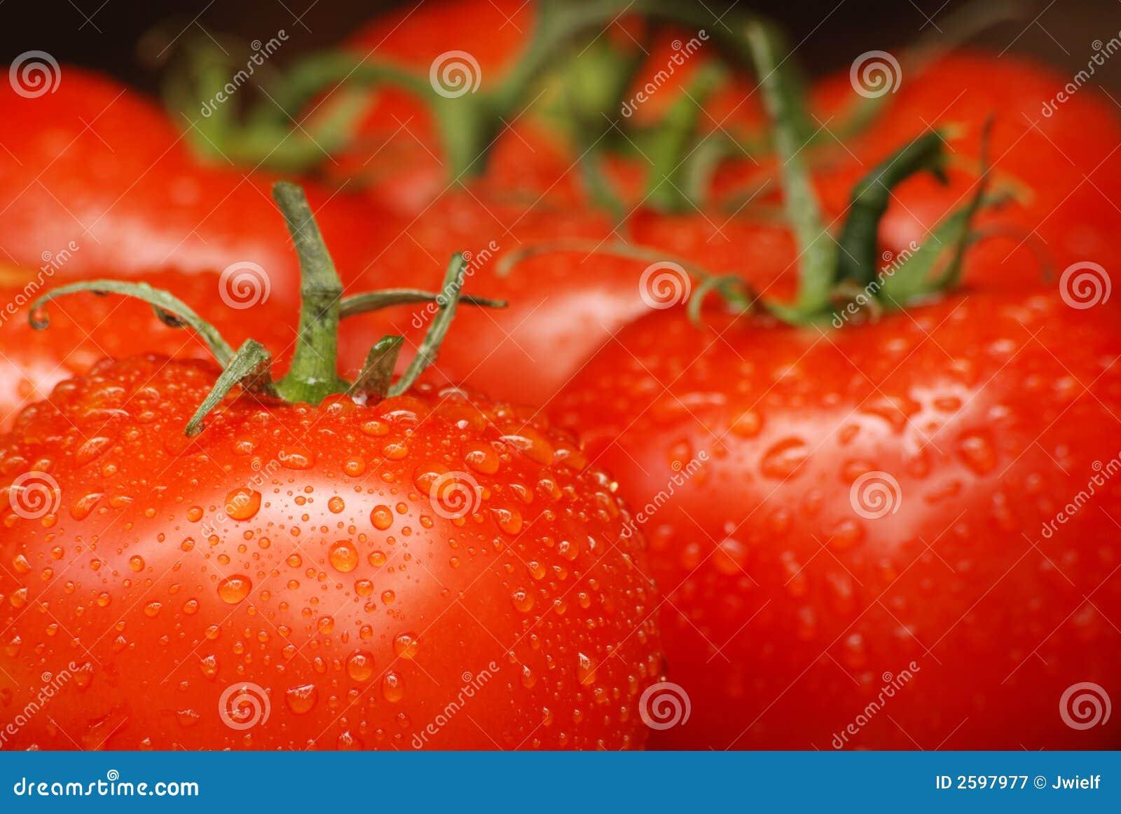De Tomaten van de zomer
