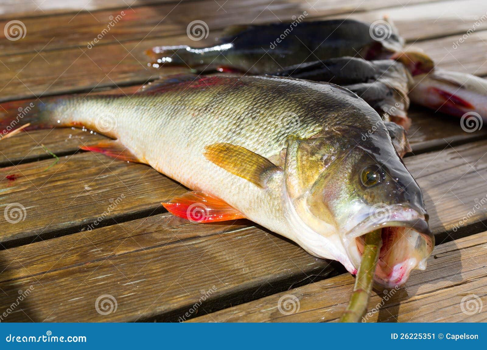 De toppositie van vissen