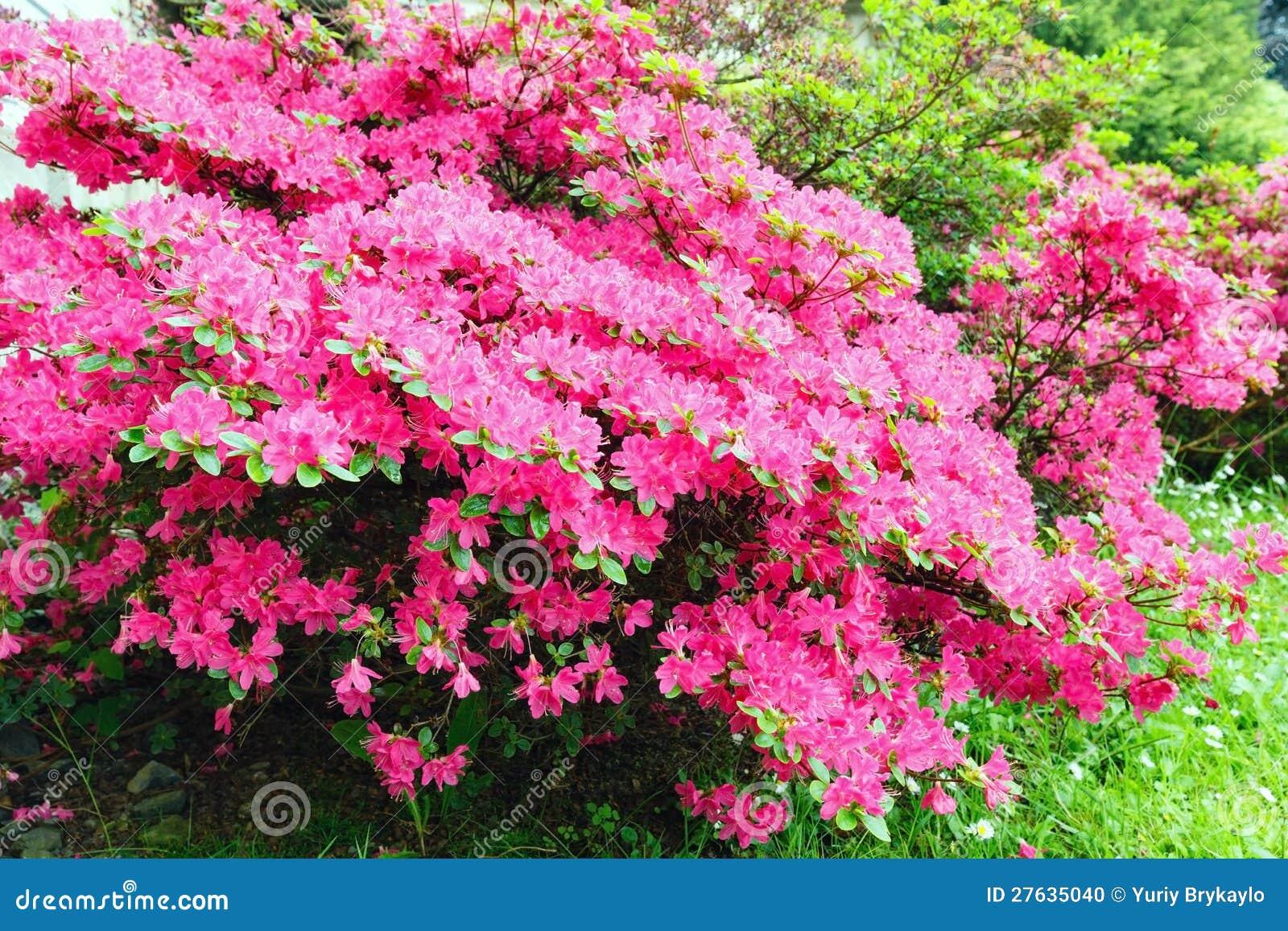 Struiken Met Bloemen Voor In De Tuin.Bloemen Struiken