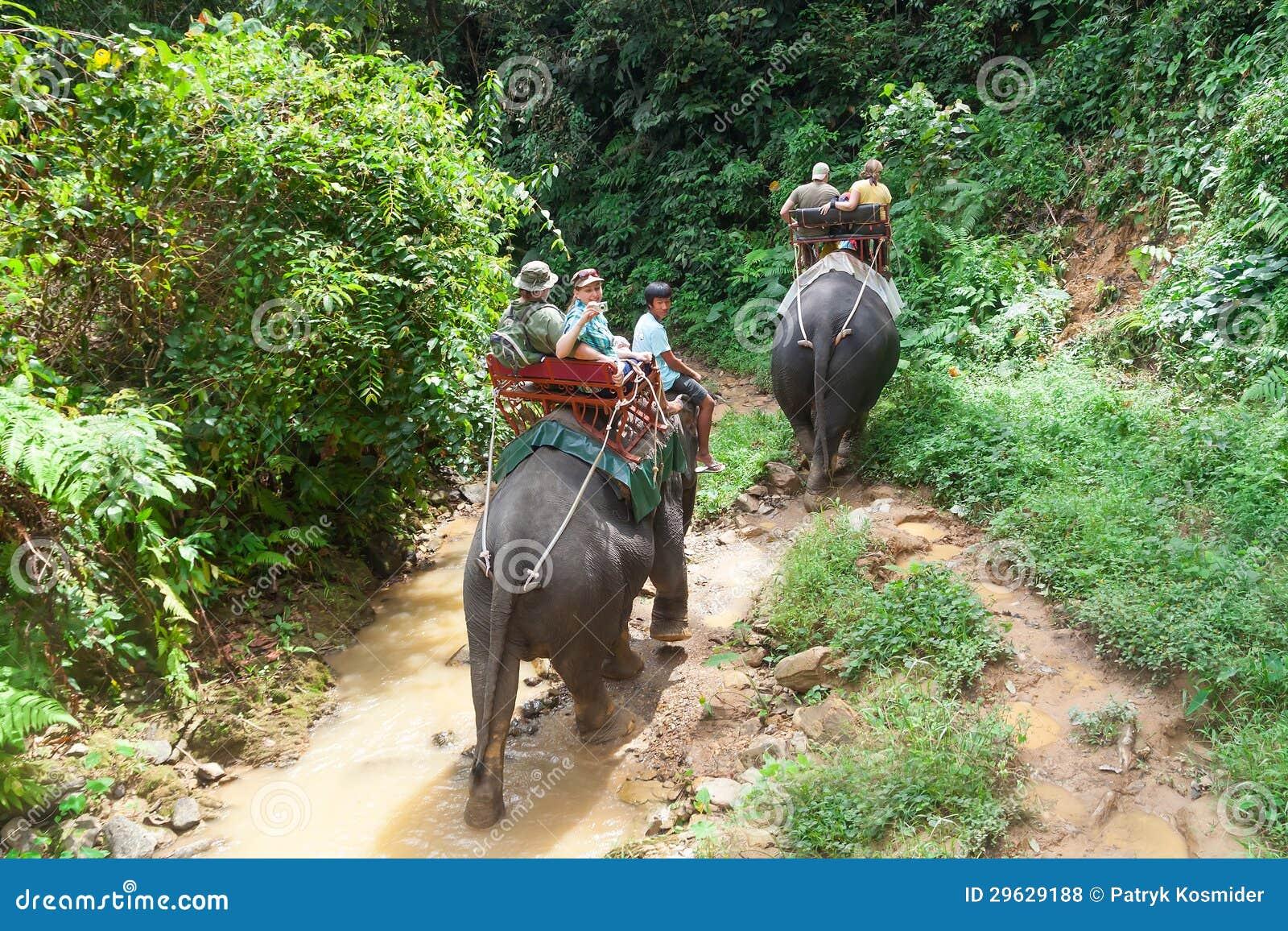 De trekking van de olifant in het Nationale Park van Khao Sok