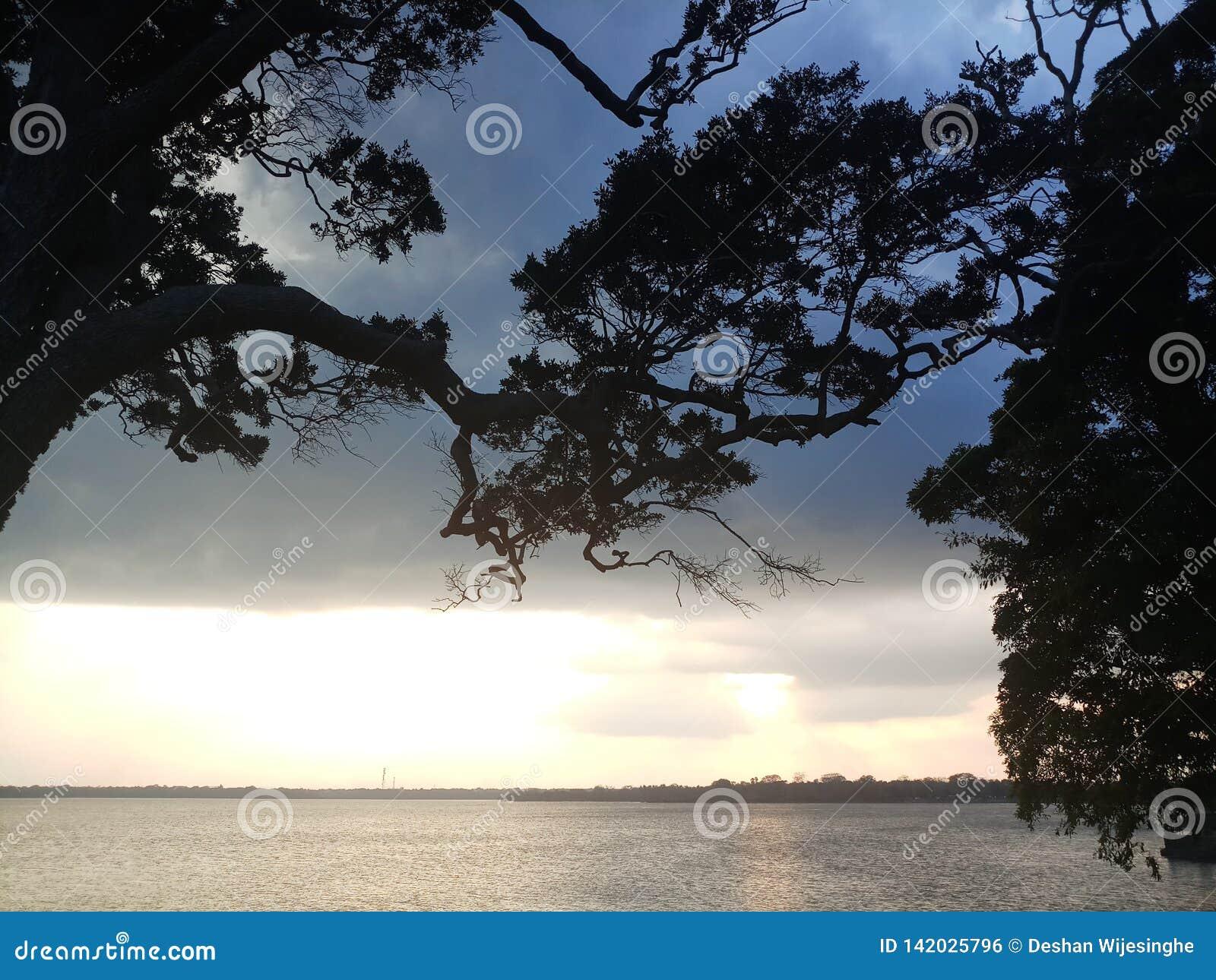 De trog reusachtige bomen van de avondhemel