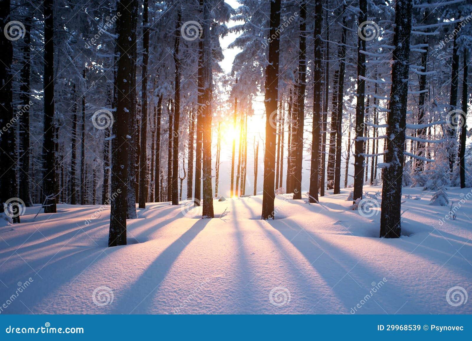 Zonsondergang in het hout