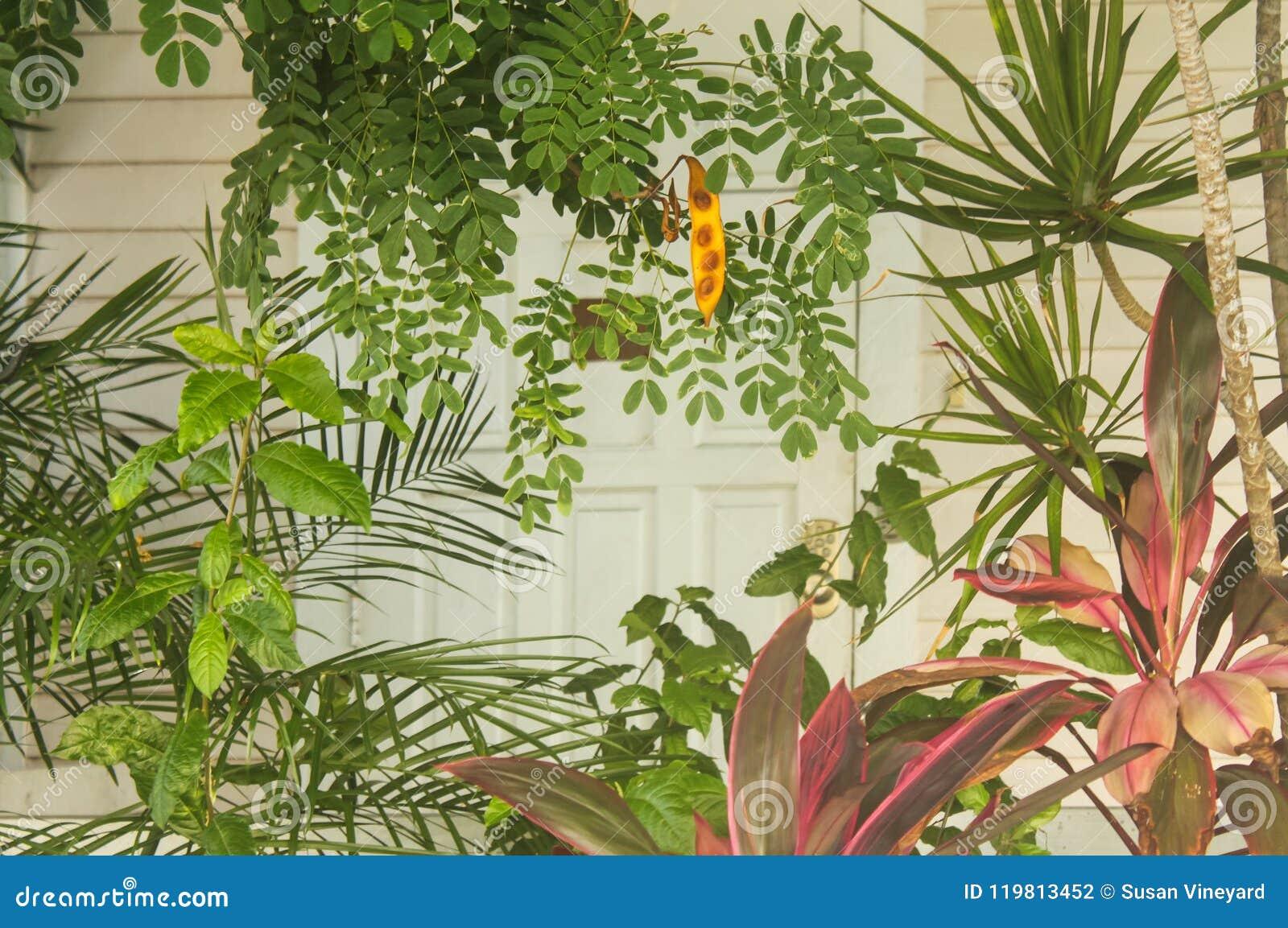 De tropische achtergrond van Eilandkey west met kleurrijke maar gedempte installaties voor een vage sectie van een witte blokhuis