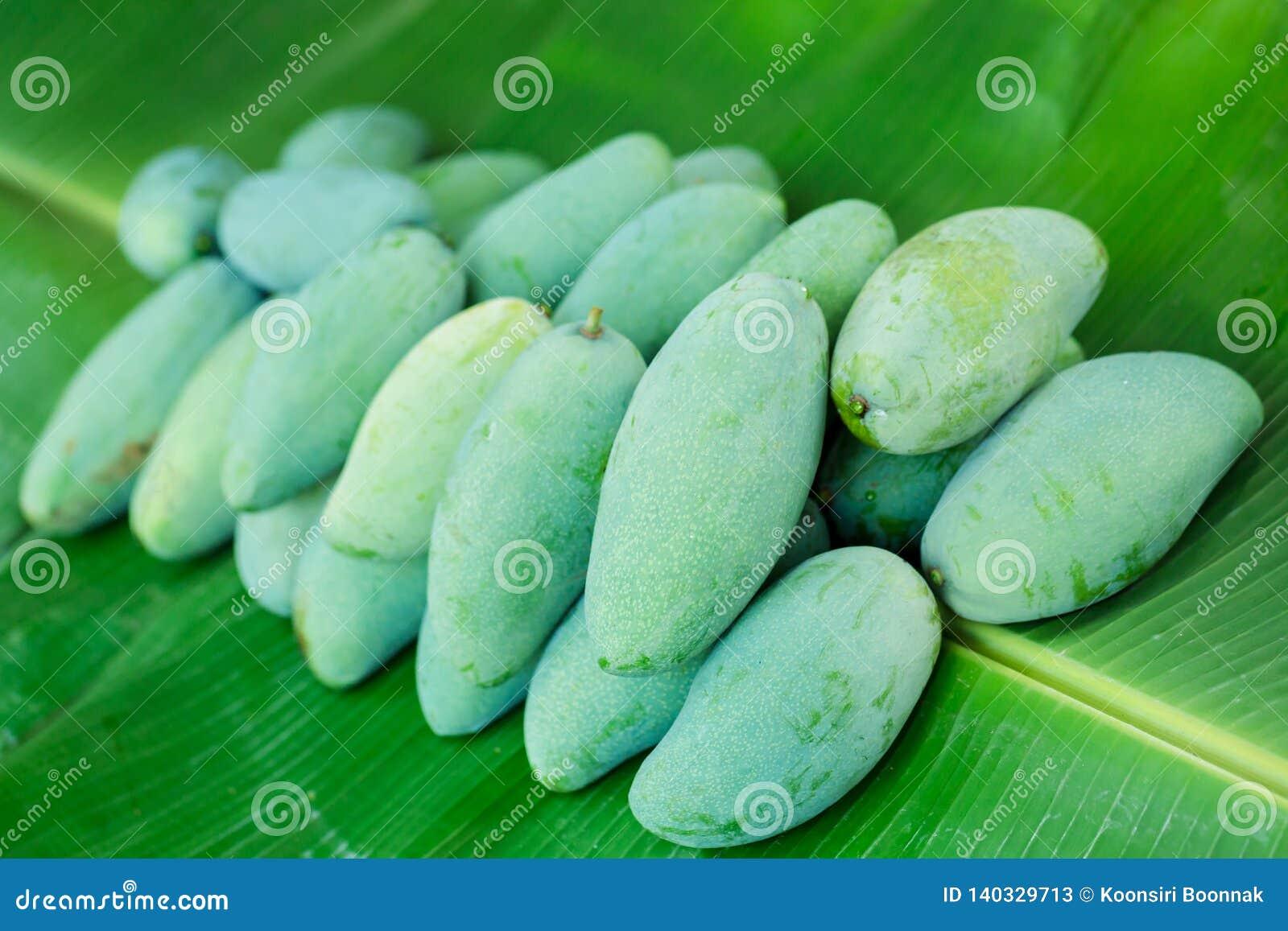 De tropische Thaise groene mango is populair fruit op banaanblad, heeft de mango een uniek aroma met zure smakelijke en hoge vita