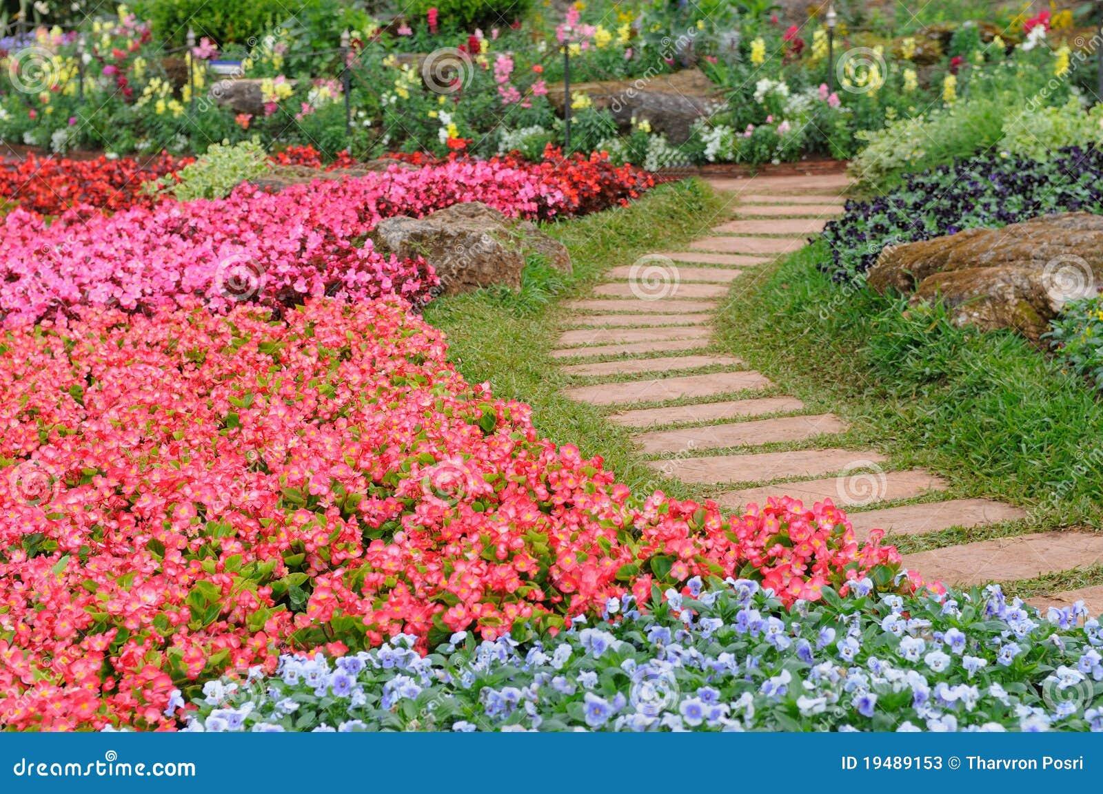 De tuin van bloemen thailand stock foto 39 s afbeelding 19489153 - Tuin van de tuin ...