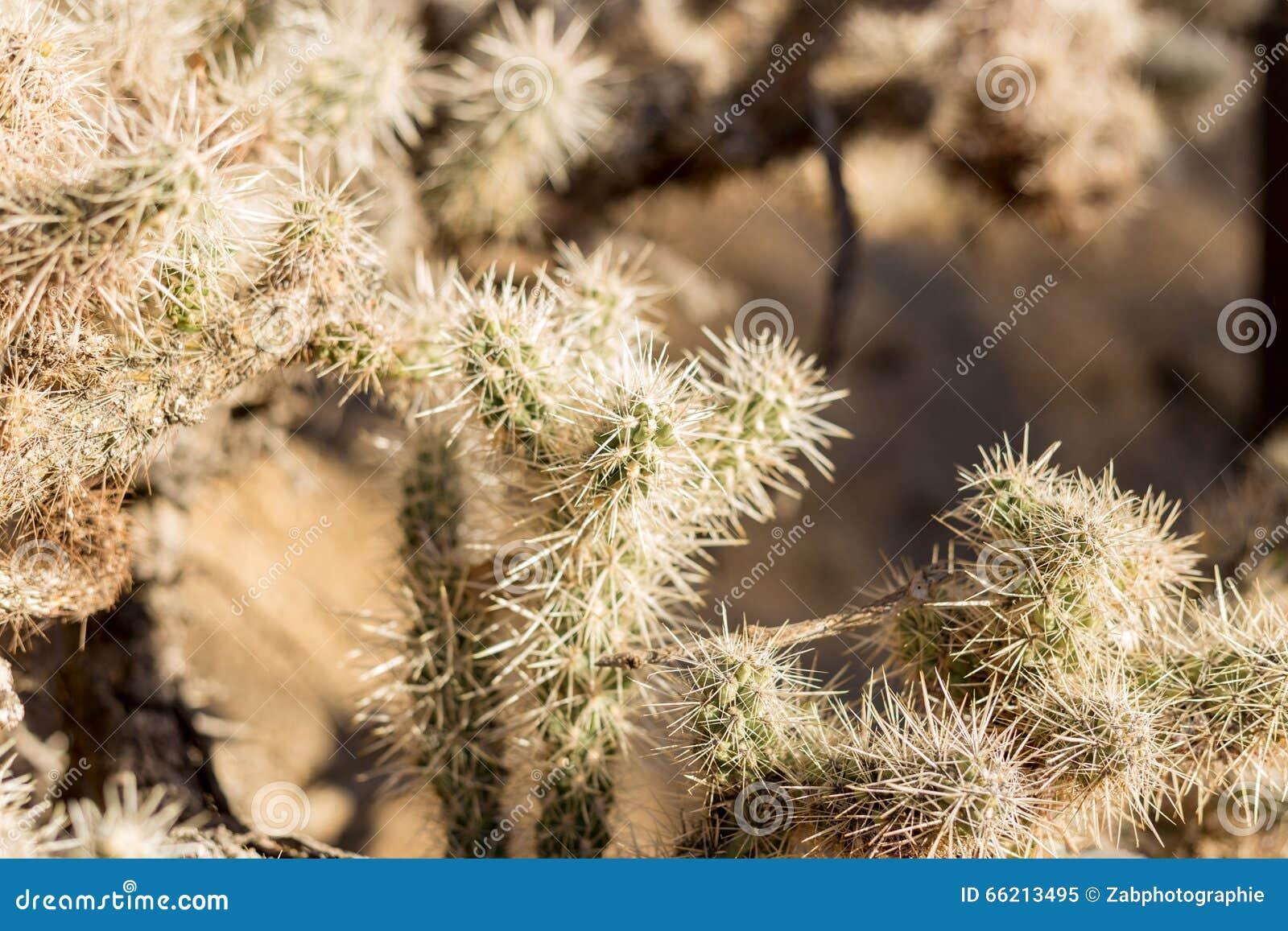 De Tuin van de Cactus van Cholla
