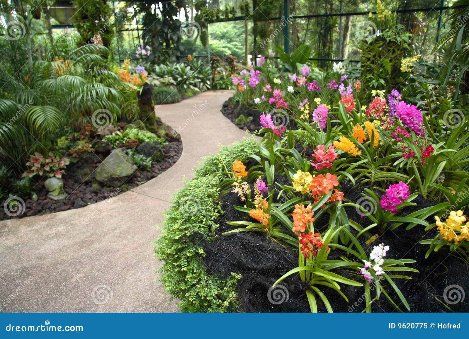 de tuin van de orchidee stock afbeelding afbeelding bestaande uit toon 9620775. Black Bedroom Furniture Sets. Home Design Ideas