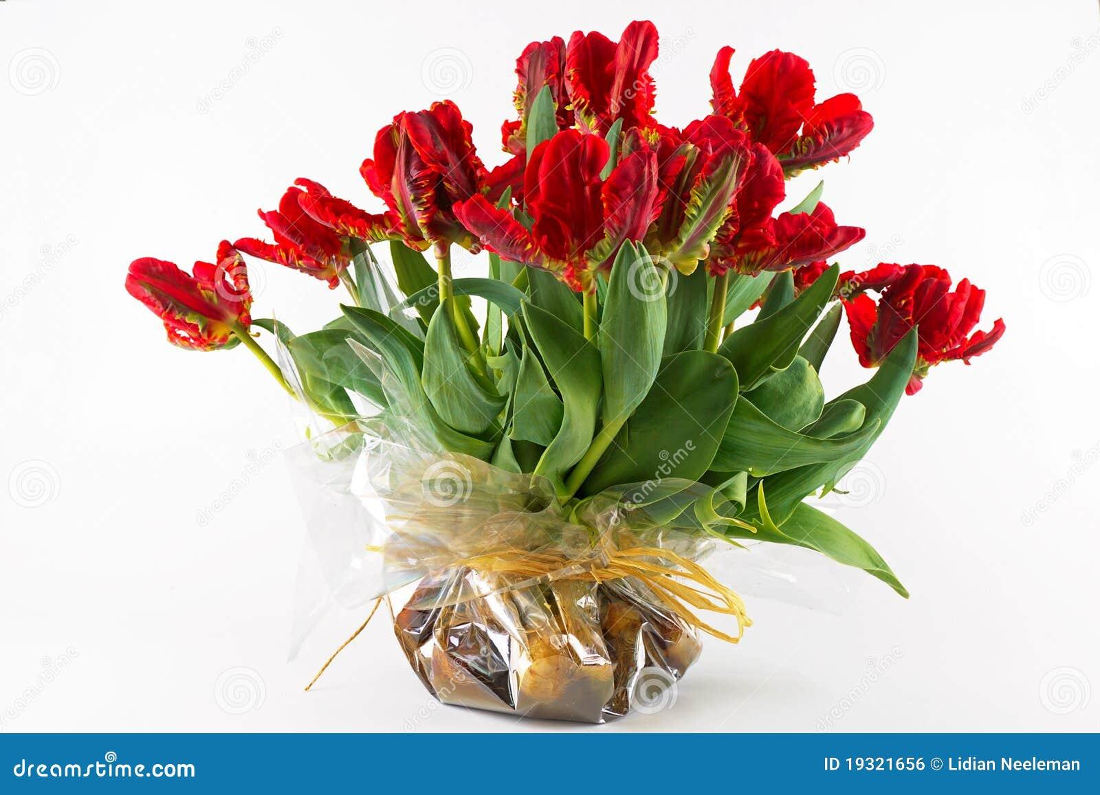 De Tulpen van de papegaai stock foto  Afbeelding bestaande uit seizoen   19321656