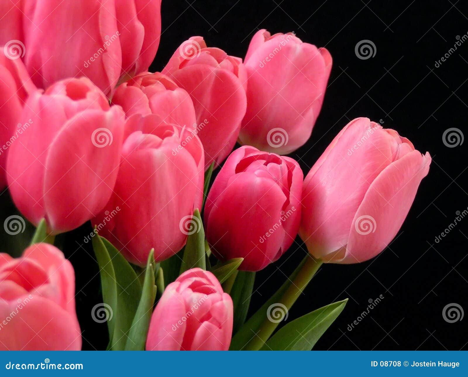 De tulpen van de valentijnskaart