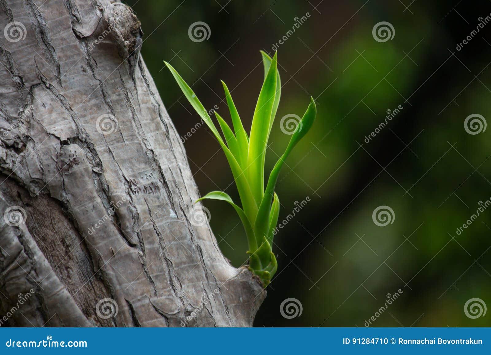 De unga forsarna av gamla träd med suddighetsbakgrund