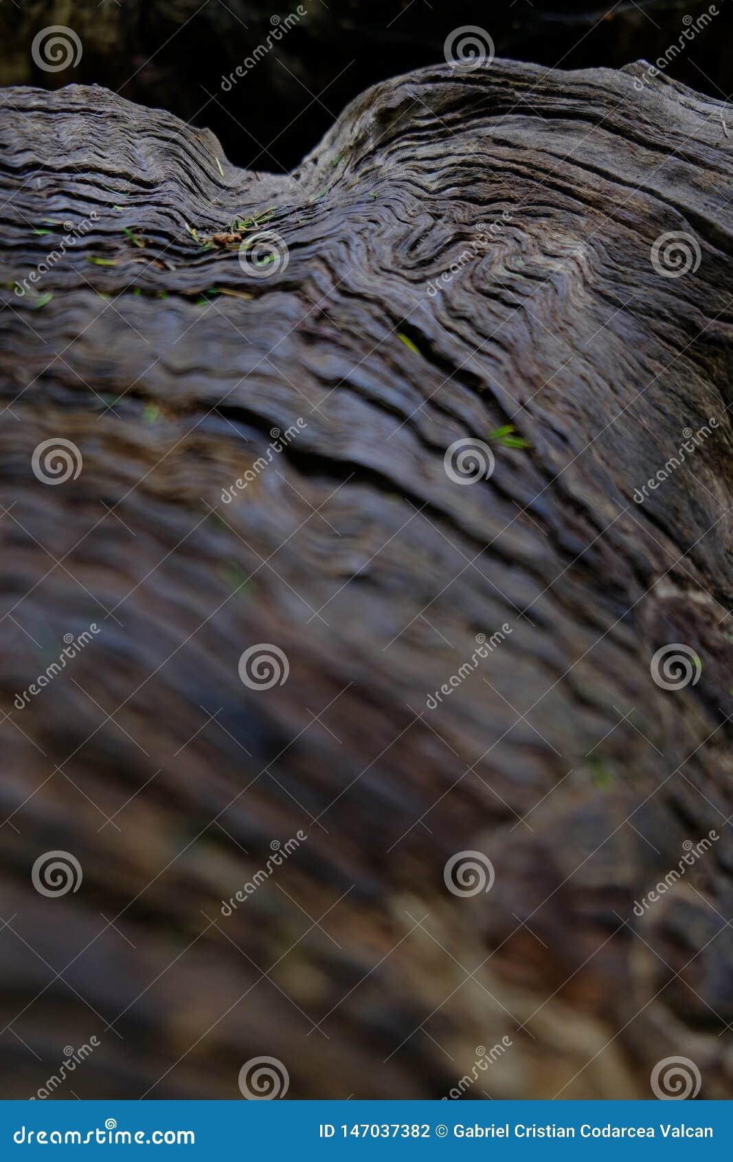 De vage voorgrond van de boomboomstam textuur