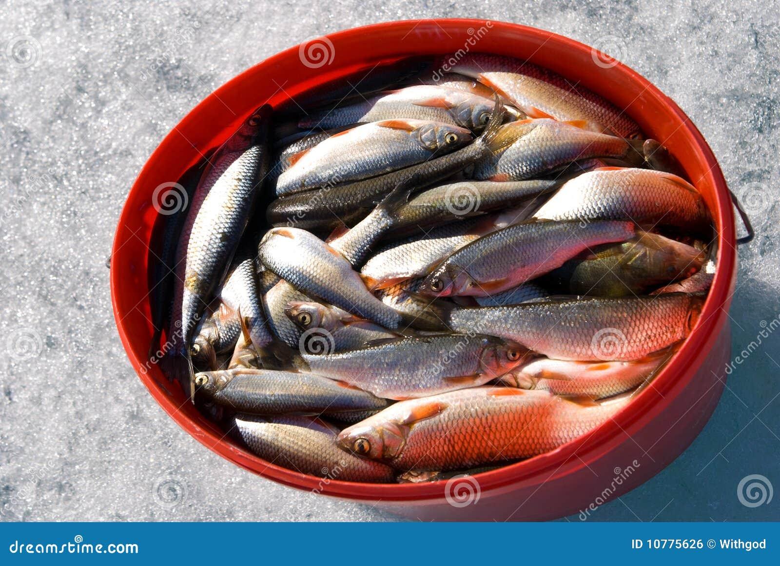 De vangst van de winter