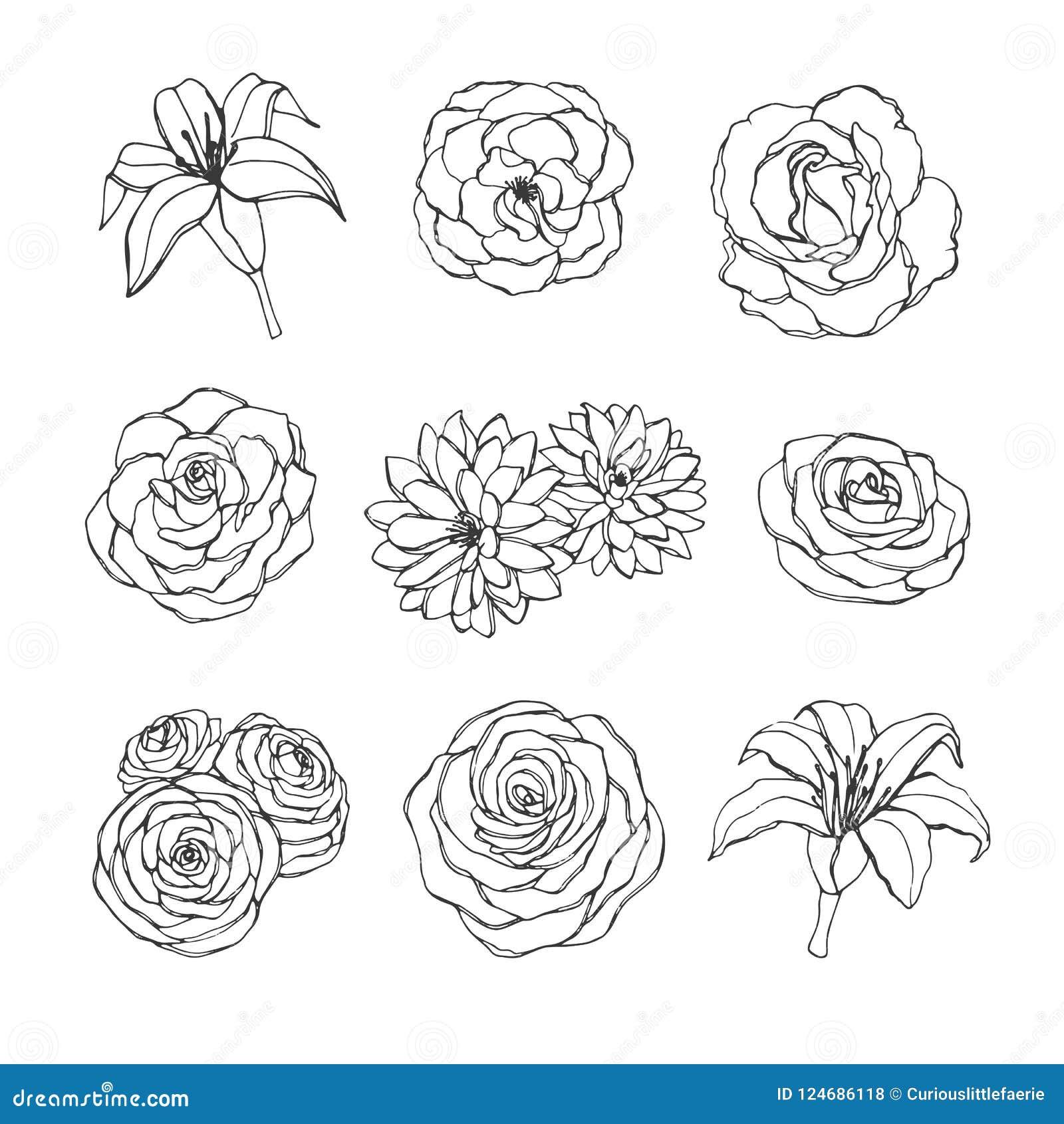De vectorhand getrokken die reeks van roze, lelie, pioen en chrysant bloeit contouren op de witte achtergrond worden geïsoleerd w