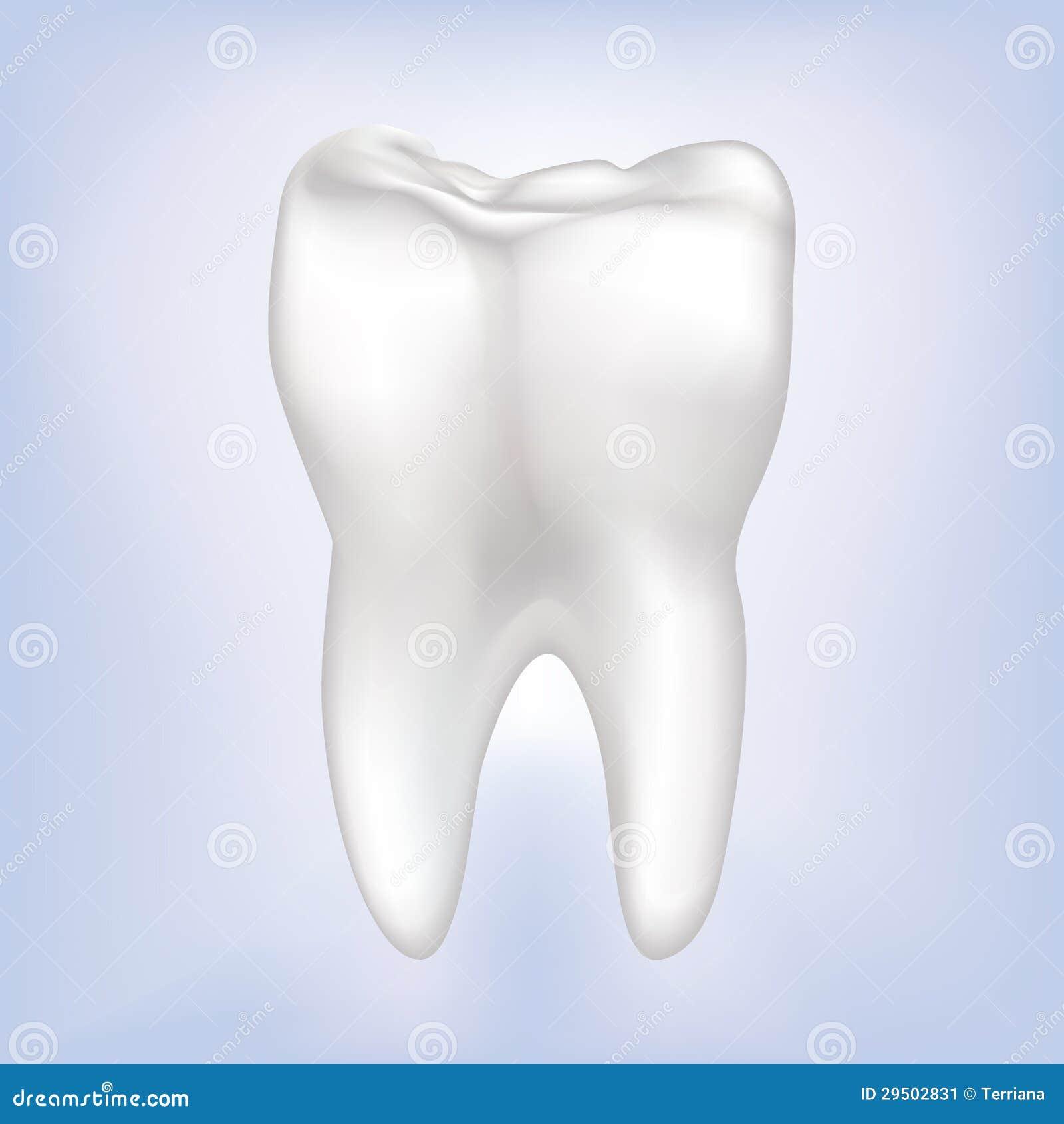 De Vectorillustratie van de tand. Geïsoleerdr.