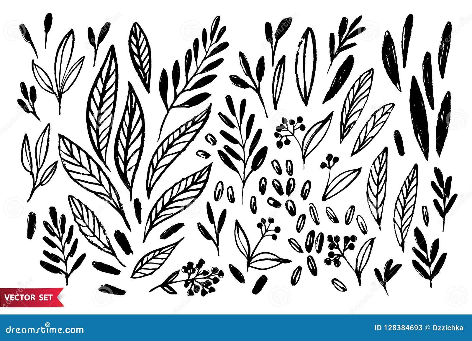 De vectorreeks van hand die wilde installaties, kruiden en bessen, zwart-wit artistieke botanische illustratie trekken, isoleerde