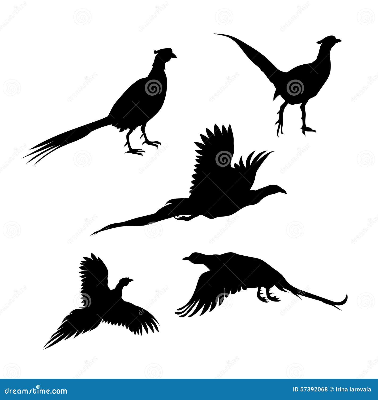 De vectorsilhouetten van de vogelfazant