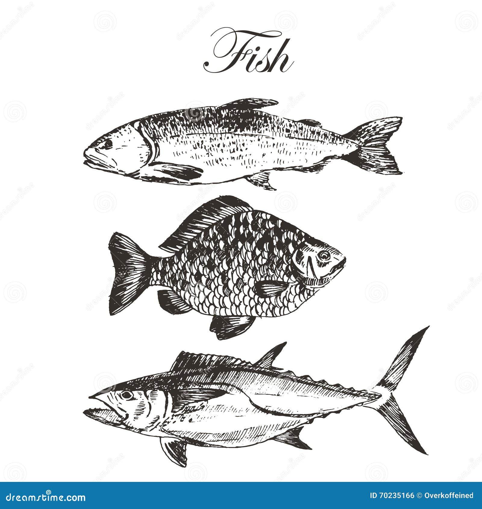 De vectortekening van de vissenschets - zalm, forel, karper, tonijn hand getrokken overzees voedselillustratie