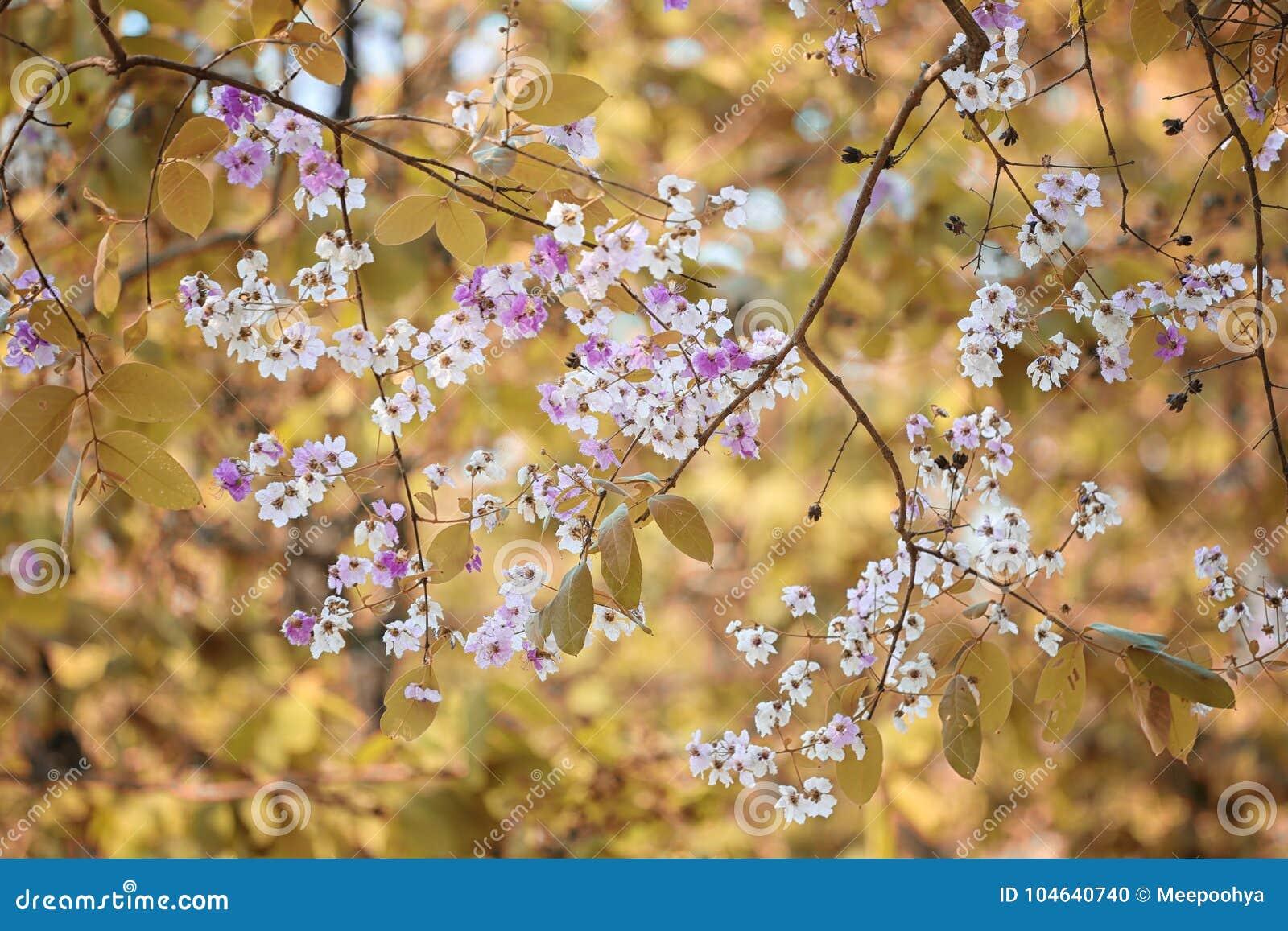Download De Verandering Van De Bladkleur En Bloeiende Bloemen Stock Foto - Afbeelding bestaande uit naughty, park: 104640740
