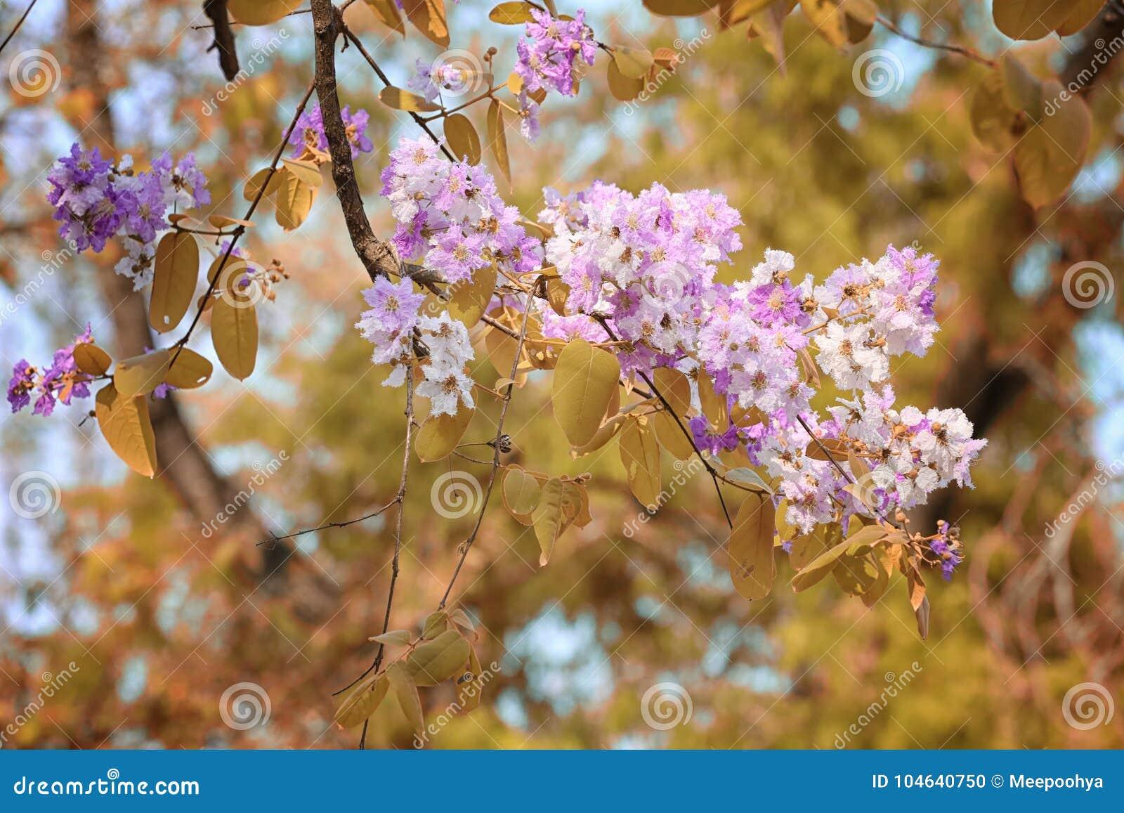 Download De Verandering Van De Bladkleur En Bloeiende Bloemen Stock Foto - Afbeelding bestaande uit achtergrond, bloesem: 104640750