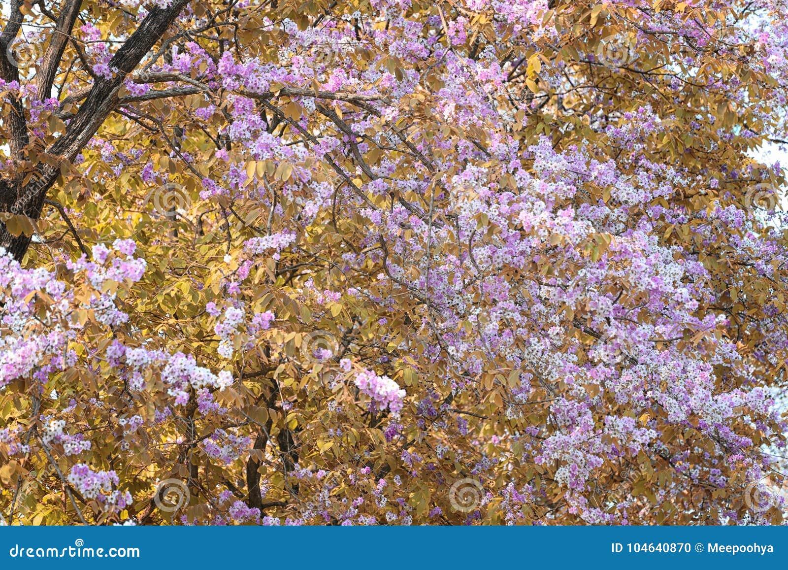 Download De Verandering Van De Bladkleur En Bloeiende Bloemen Stock Foto - Afbeelding bestaande uit openlucht, seizoen: 104640870