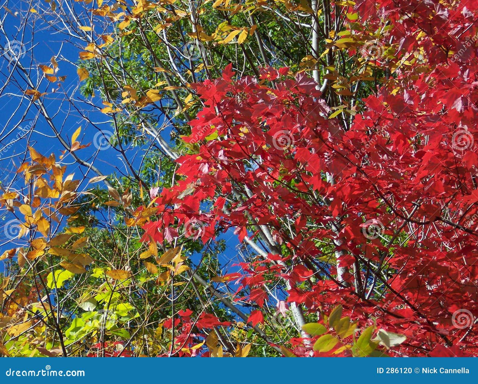 De Verandering van de kleur in de herfst