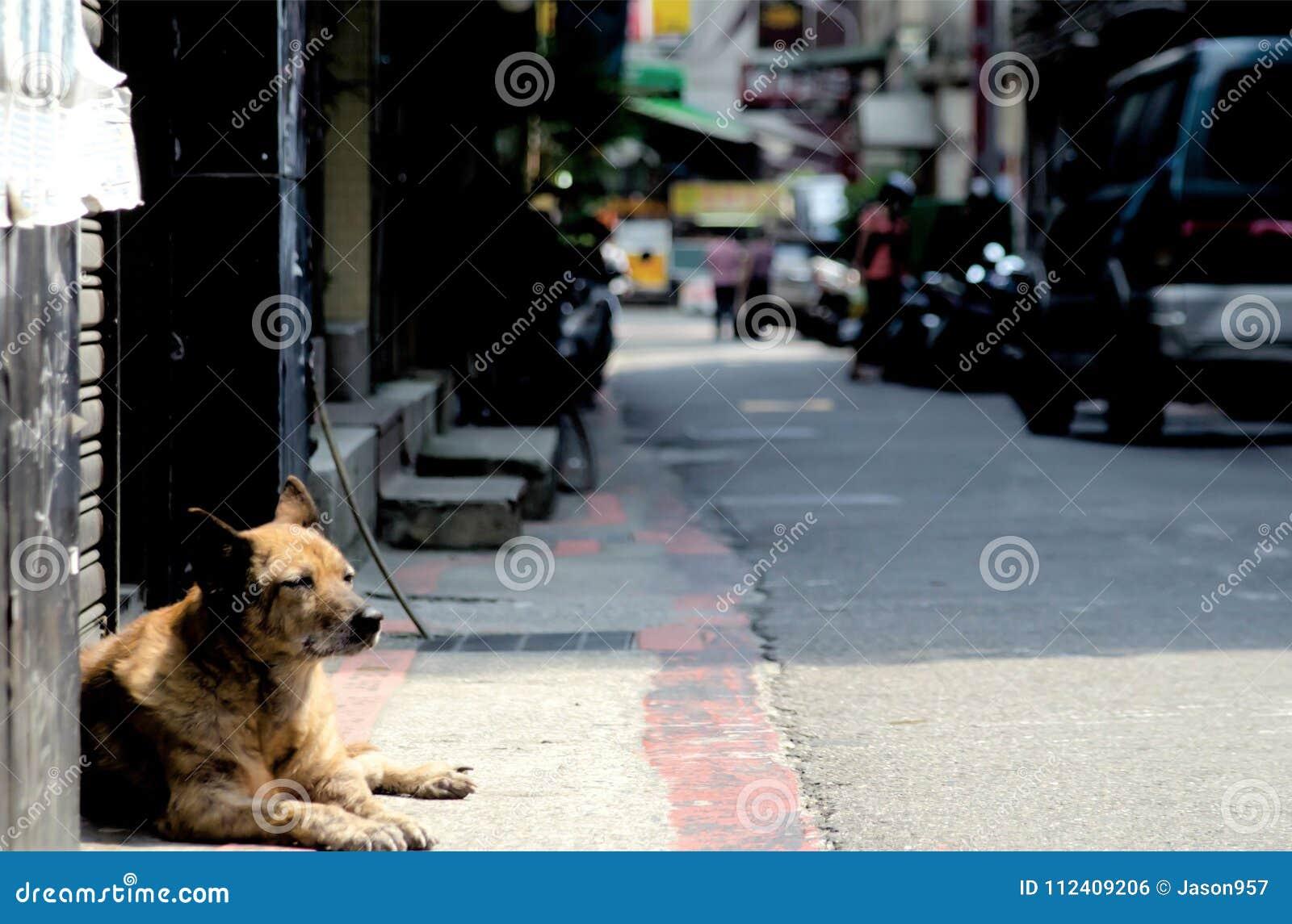 De verdwaalde Hond in Taiwan slaapt op de straat in Taipeh, Taiwan De hamel van Taiwan ` s is tropisch en sneeuwt niet veel tijde