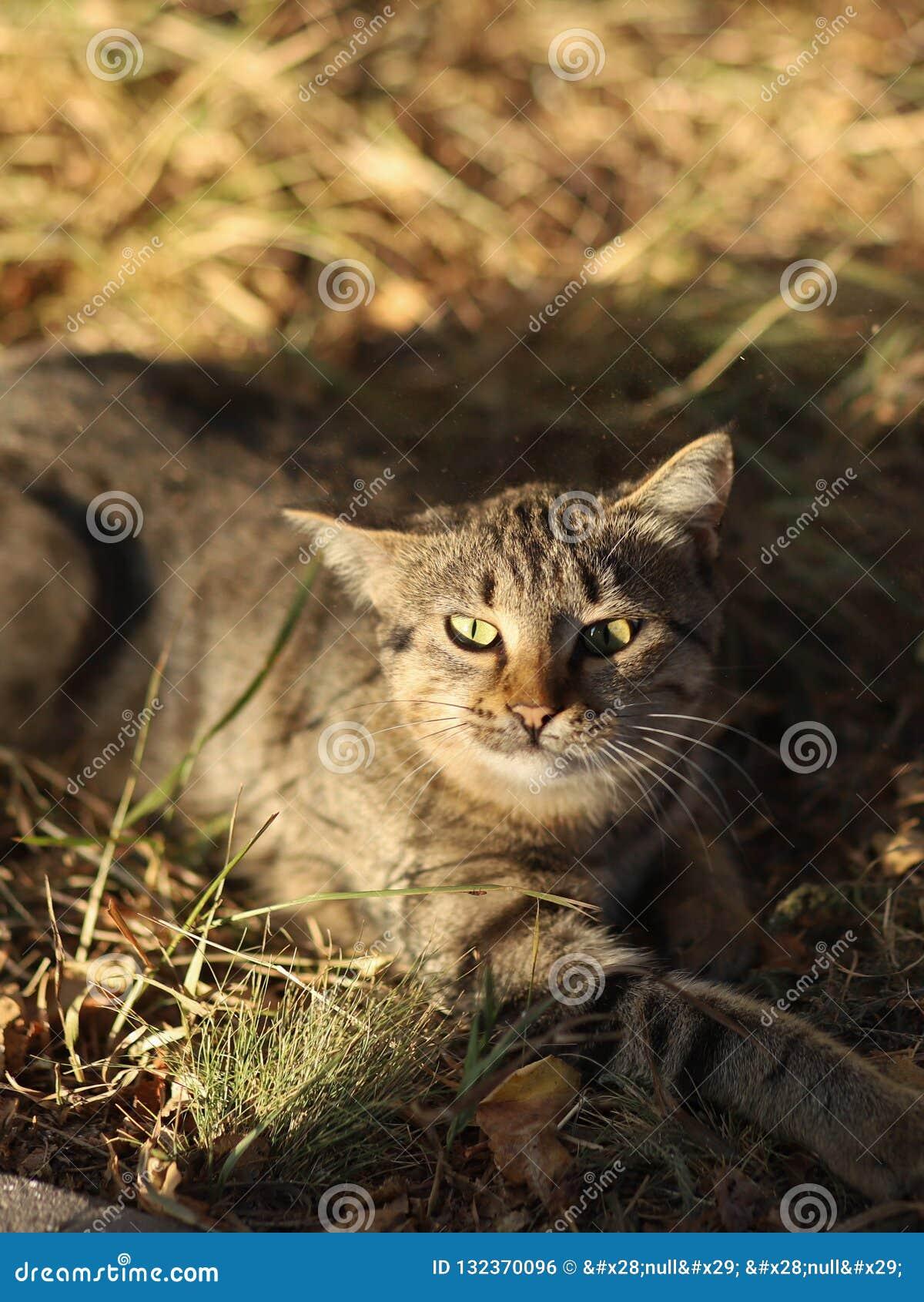 De verdwaalde nieuwe foto van Cat Photographer, kleine tijgerkat ontspant