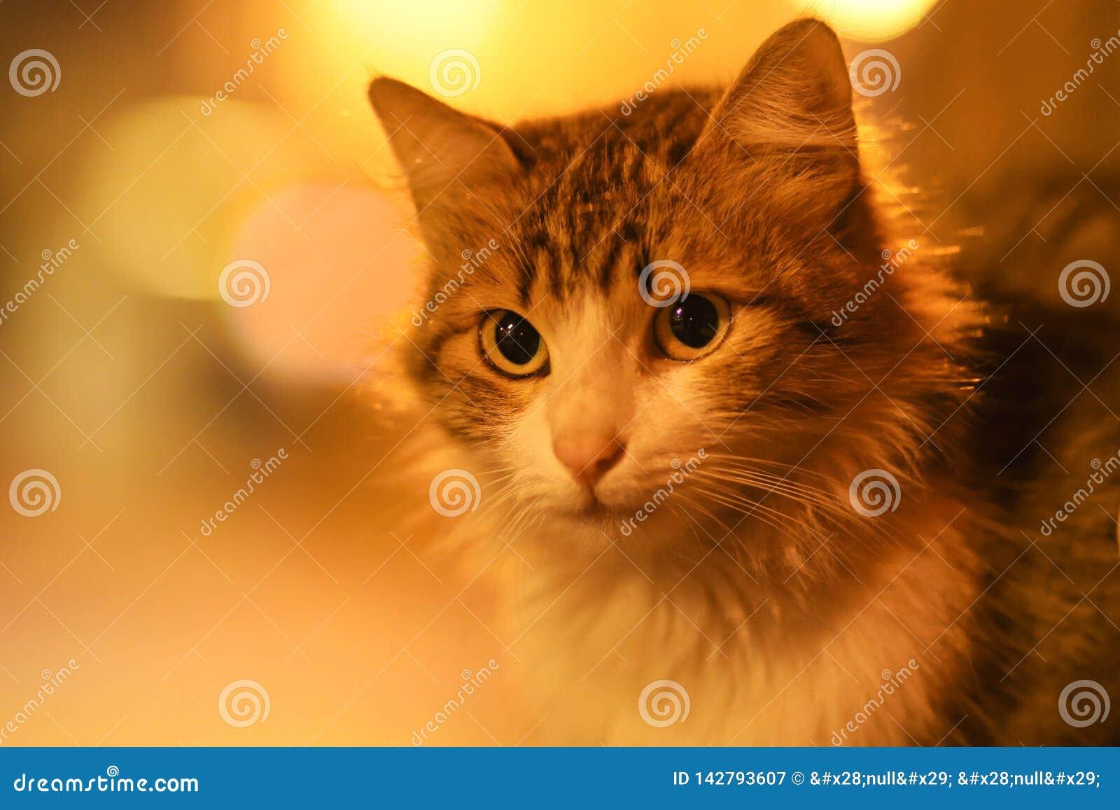 2019 de Verdwaalde nieuwe foto van Cat Photographer, leuke straatkatten in de nacht