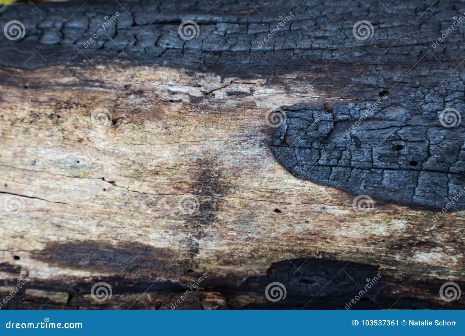 De verkoolde achtergrond van het logboekdetail die door een bosbrand zwart wordt gemaakt