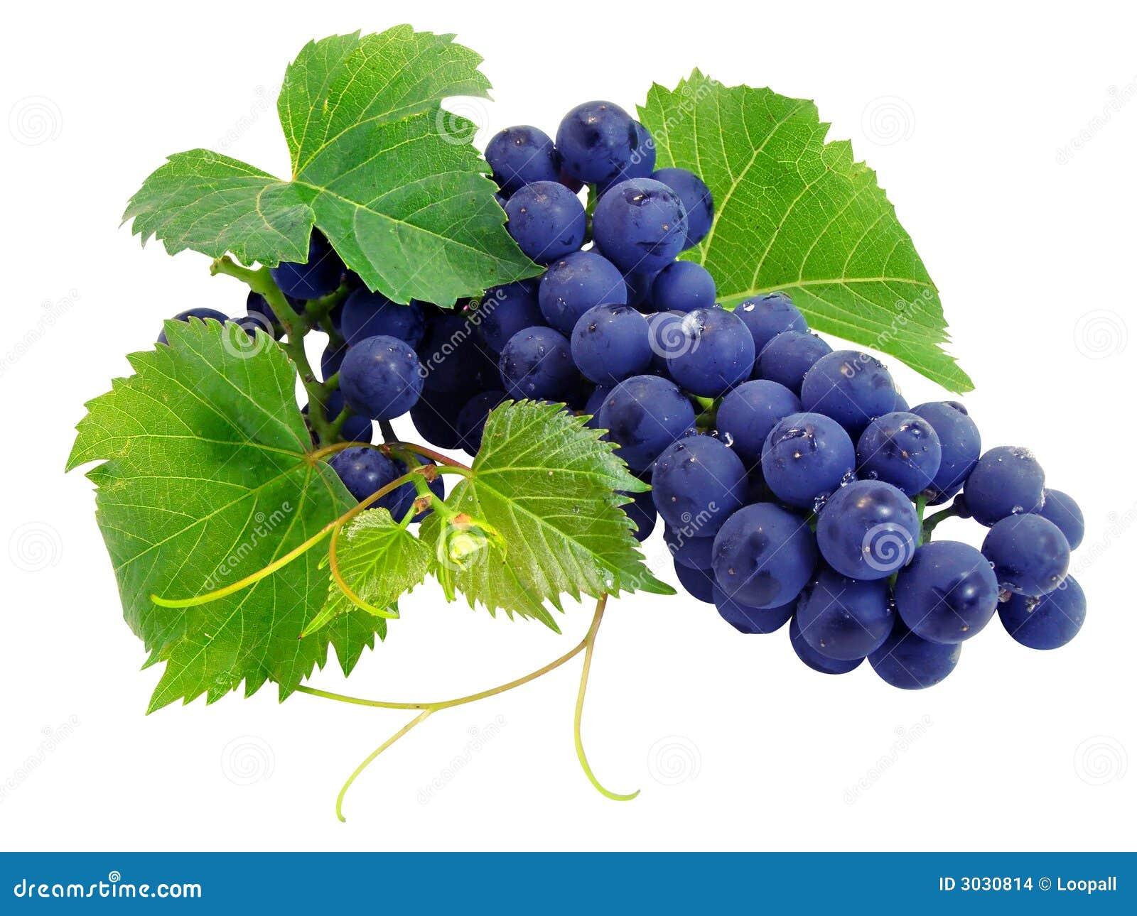 De verse druivencluster met doorbladert