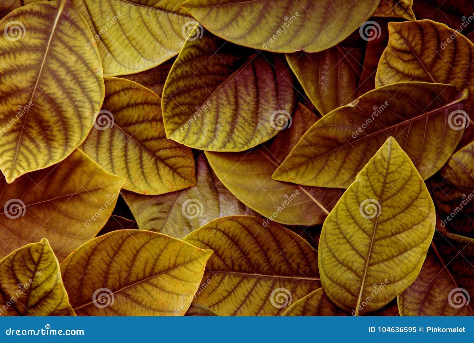 Download De Verse Tropische Geelgroene Bladerenachtergrond Stock Afbeelding - Afbeelding bestaande uit groen, banner: 104636595