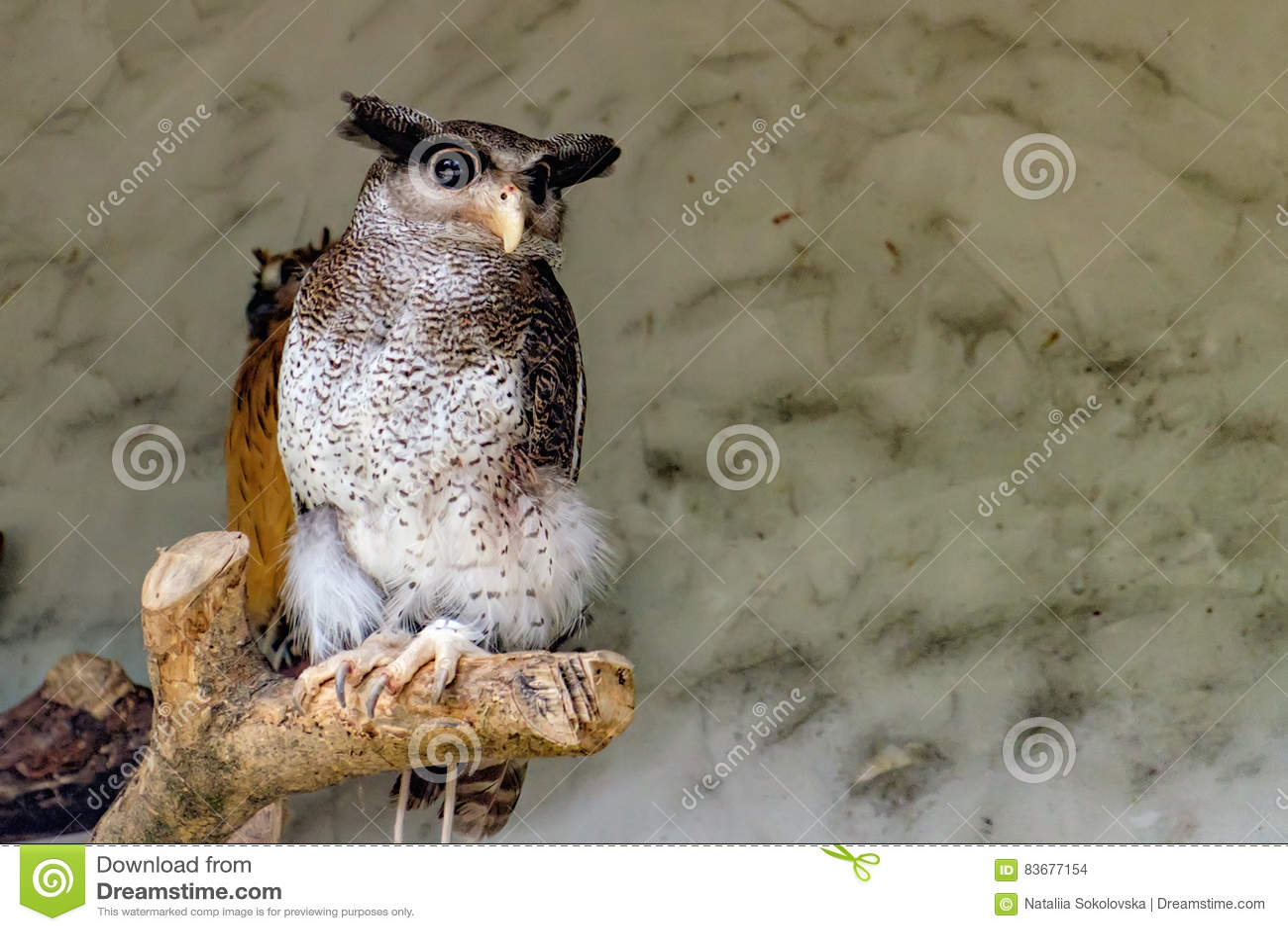 De versperde Eagle-uil