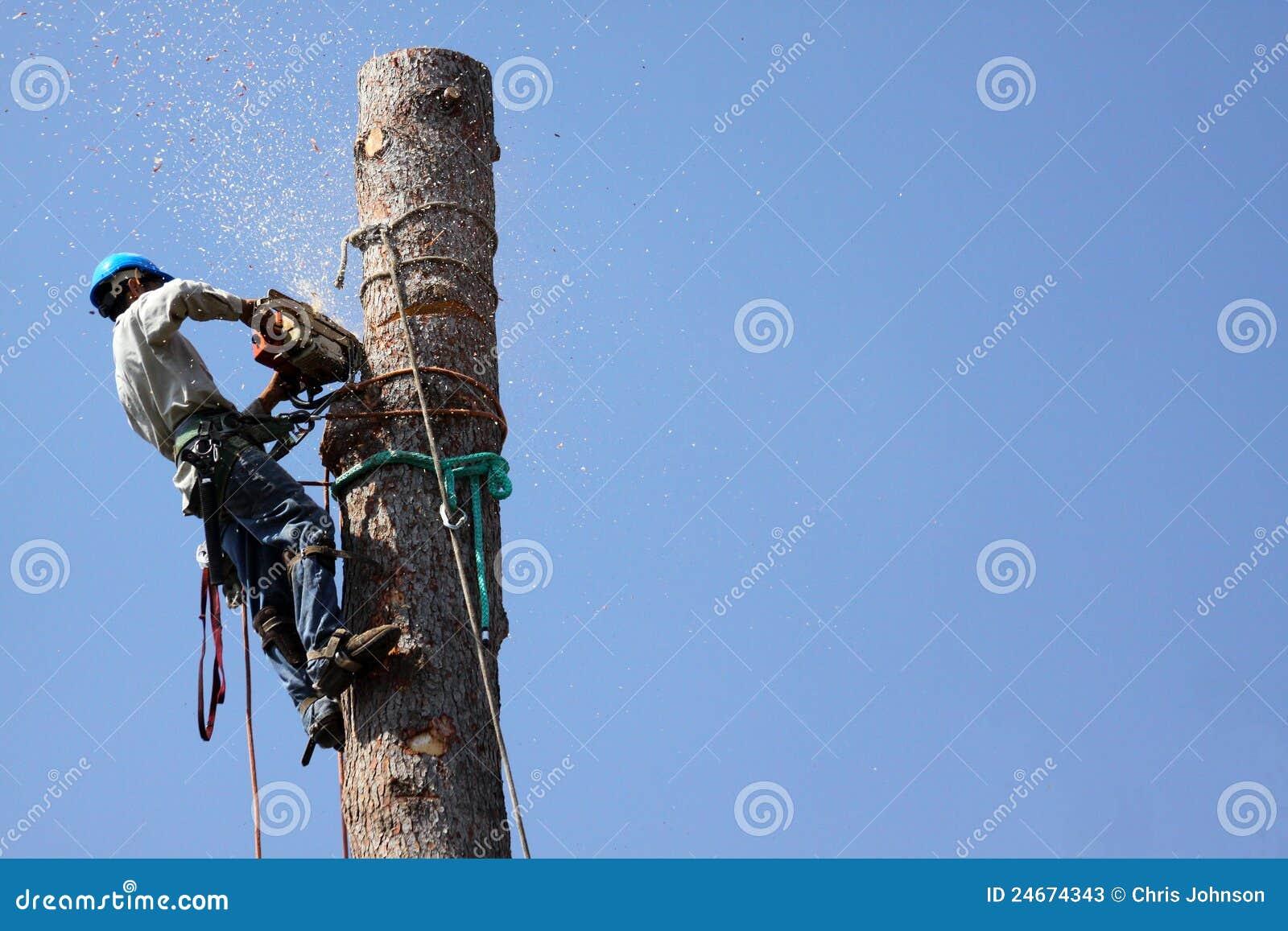De Verwijdering van de boom