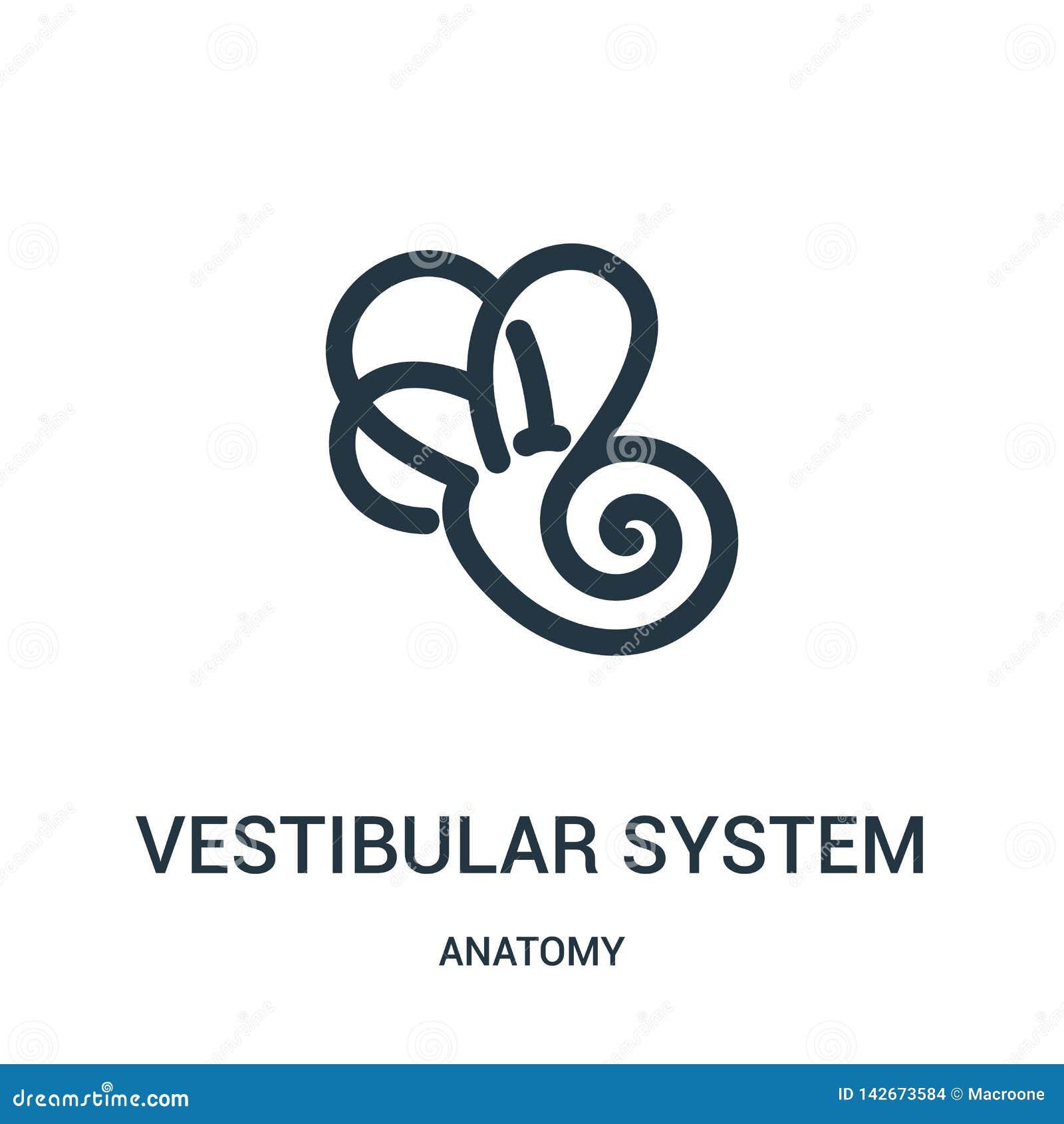 De vestibulaire vector van het systeempictogram van anatomieinzameling De dunne van het het overzichtspictogram van het lijn vest
