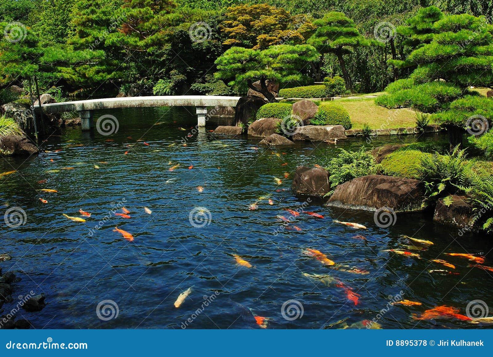 De vijver van vissen bij japanse tuin stock foto for Vissen vijver