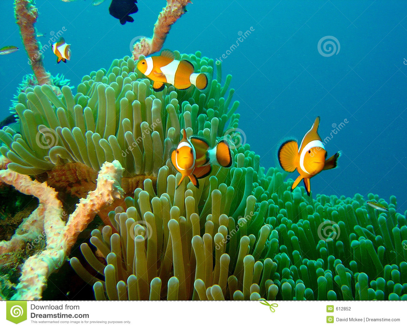 De Vissen Nemo van de clown