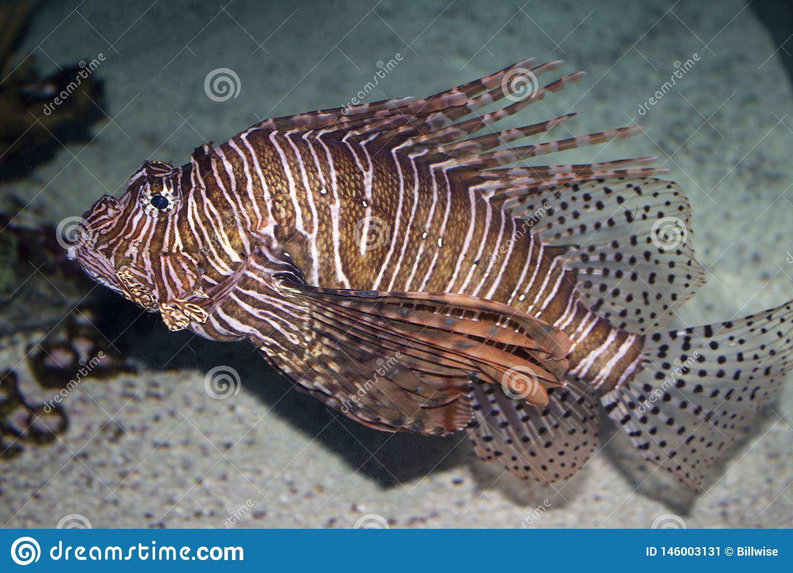 De vissen van de aquariumleeuw