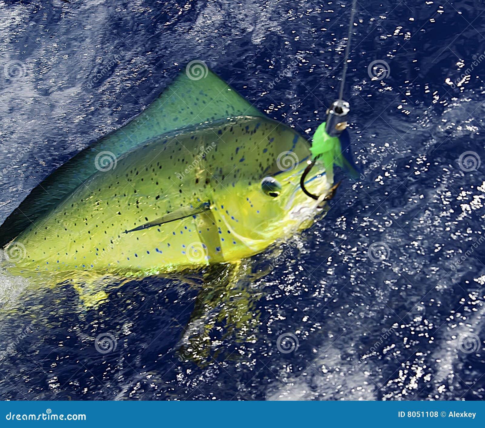 De Vissen van de dolfijn