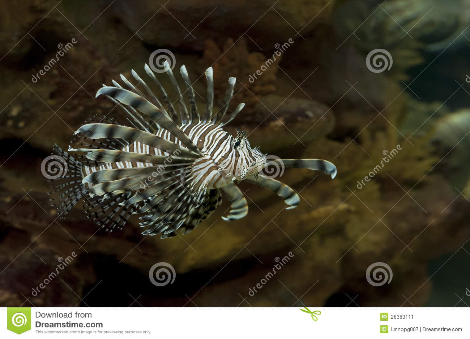 De Vissen van de Leeuw van het zoutwater