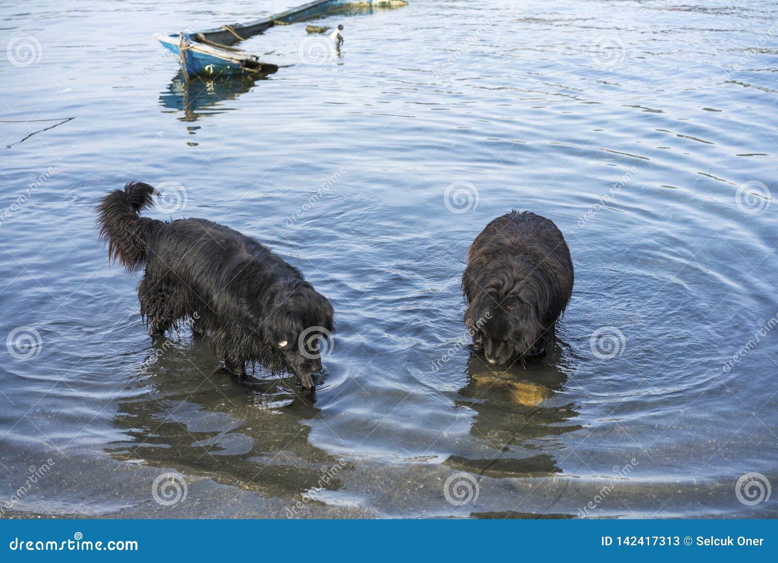 De visserij van honden die vissen zoeken in het overzees
