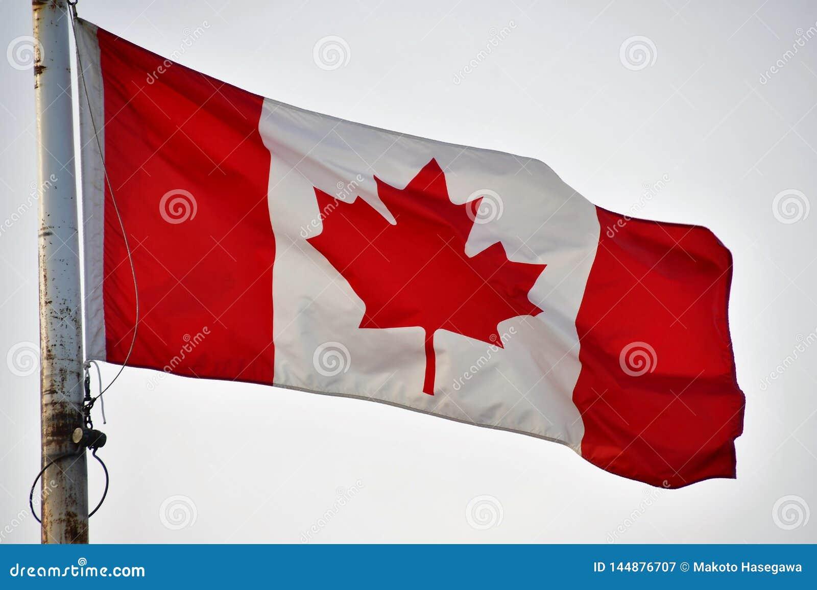 De vlag van Canada golft in de hemel